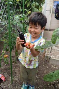 夏野菜を植え付けしました!(2)